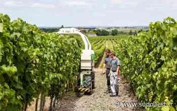 Cognac : cap zéro herbicide chez Hennessy en 2028 - Sud Ouest