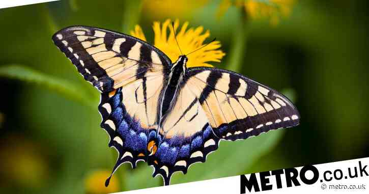 Google 3D insects: how to see beetles and butterflies in 3D