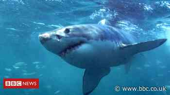 Maine shark attack: US woman killed by great white