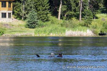 Spearfishers converge on Placid Lake - Seeley Swan Pathfinder
