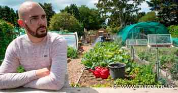 Gardener has beloved allotment sabotaged by 'jealous' rival in paint attack