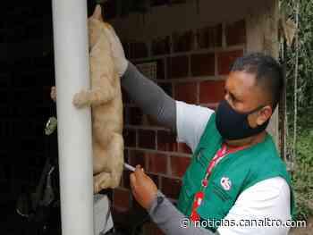 Llega vacuna antirrábica para mascotas a Ragonvalia - Canal TRO