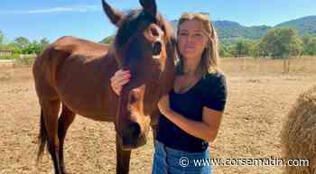 Porto-Vecchio : nouvel appel aux dons pour L'Aghja, une jument aveugle de 24 ans - Corse-Matin