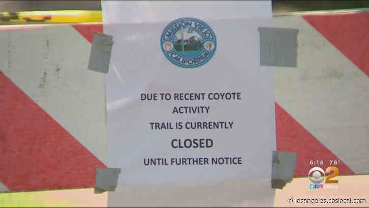 Oso Creek Trail Closed After Pair Of Coyote Attacks