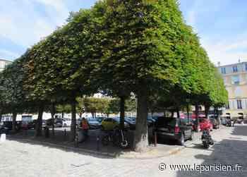 Versailles : victimes de champignons, les arbres des Carrés vont être abattus - Le Parisien