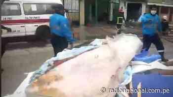Reportan explosión de gas al interior de una lavandería en el Callao - Radio Nacional del Perú