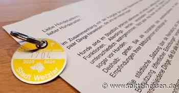 Stadt Wetzlar zieht am 15. August Hundesteuer ein - Mittelhessen