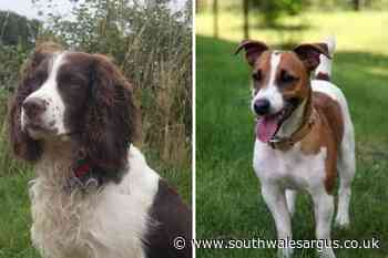 Markham dogs stolen from farm - South Wales Argus