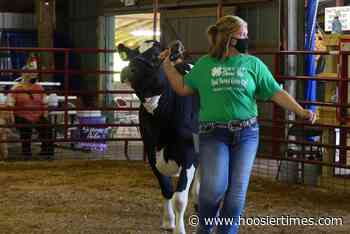 Johnson grand champion of Dairy Show | Springs Valley Herald - Times-Mail