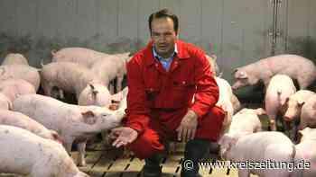 Schweine in der Warteschleife - kreiszeitung.de