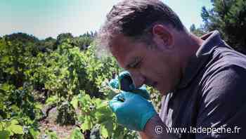 Castelnaudary. Raphaël Gachon, conseiller technique en viticulture - ladepeche.fr