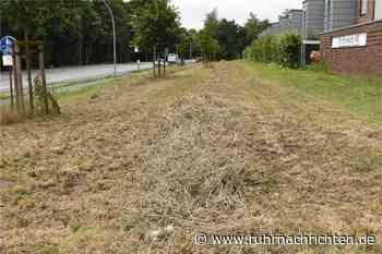 Ratlosigkeit über abgemähte Blühwiesen in Werne - Ruhr Nachrichten