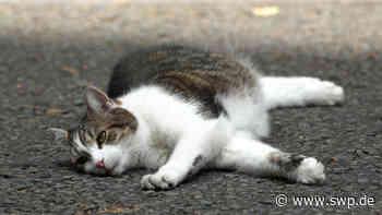 Polizei Ellwangen: Katze steckt mit Kopf in Marmeladenglas fest - SWP