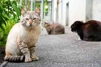 Erste Gemeinde in Südbaden geht gegen verwilderte Katzen vor - Ehrenkirchen - Badische Zeitung - Badische Zeitung