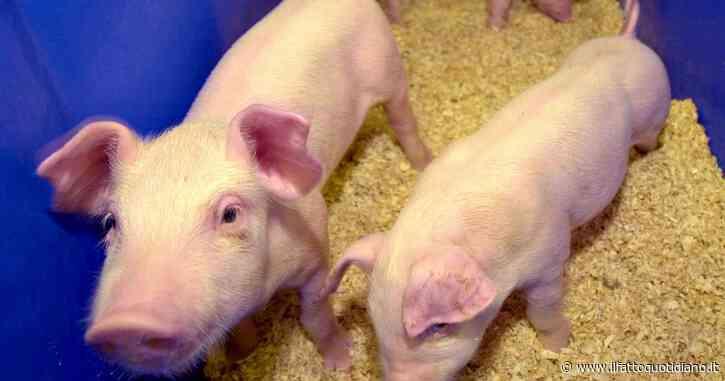 Diritti animali, chiuso l'allevamento degli orrori a Senigallia: un grande passo avanti