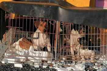 """Drie angstige hondjes achtergelaten bij dierenasiel: """"Dump hen alsjeblieft niet zomaar"""""""