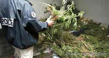 Importante saisie d'herbe de cannabis à Trans-en-Provence, deux hommes et une femme placés en garde à vue - Var-Matin