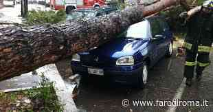 Un albero cade anche tra Monterotondo e Fiano, salva quasi per miracolo una ragazza - Farodiroma