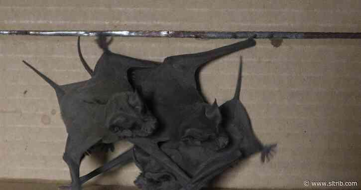 Stay away from bats, health officials warn Utahns