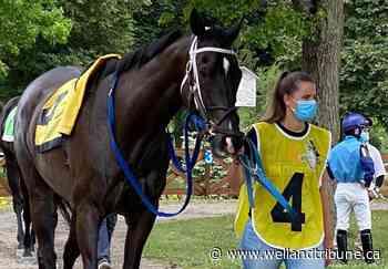 Wainfleet stable owner happy to see her horses racing again - WellandTribune.ca