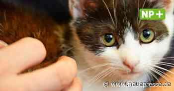 Katze klemmt unter Treppe fest: Feuerwehr Langenhagen hilft - Neue Presse