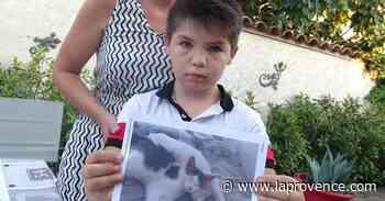 Carpentras : le chat Yago, tué d'une balle de 22 Long Rifle - La Provence