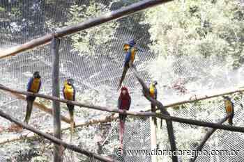 Zoológico de Rio Preto ganha Recinto de Imersão de araras e papagaios - Diário da Região
