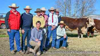 Amos-Vale Hereford sale tops at $30000 with studs successfully buying up - Glen Innes Examiner