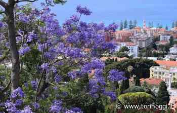 Bordighera, meta ideale per una vacanza su misura che offra svago, serenità e sicurezza - TorinOggi.it