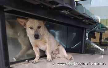 Abandonan a perros en inmediaciones de Hospital General - El Sol de Parral