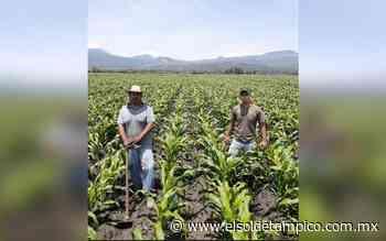 Lluvia beneficiará a 34 mil hectáreas de cultivo de Altamira - El Sol de Tampico