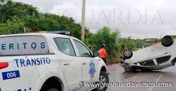 Mapaches provocan volcadura de un auto, en Altamira - Vanguardia de Veracruz