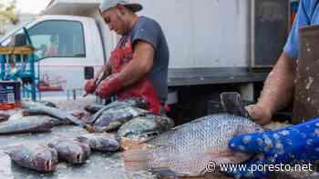 IMSS Campeche pide no consumir pescados y mariscos crudos - PorEsto