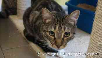 Subsidised cat desexing available for eligible Campbelltonians - Wollondilly Advertiser
