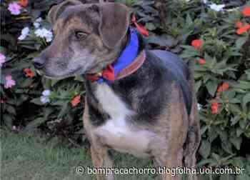 Animais resgatados após Brumadinho continuam em abrigo; catálogo virtual facilita adoção - Uol