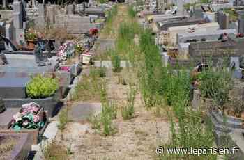 Envahi par les herbes folles, le cimetière de Saint-Ouen fait le désespoir des visiteurs - Le Parisien