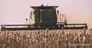 Crop development progressing rapidly: Saskatchewan Agriculture