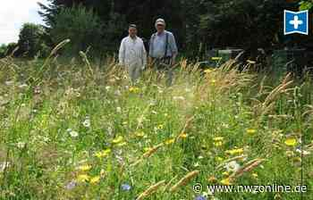 Naturschutz In Varel: Hier werden zwölf Bienenvölker satt - Nordwest-Zeitung