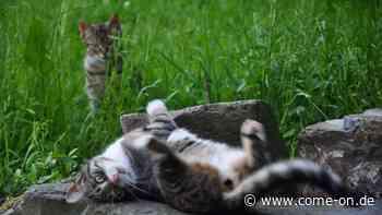 Gesucht zum Weltkatzentag: Die schönsten Katzenfotos - jetzt mitmachen - come-on.de