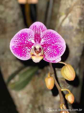 Foto do dia: beleza da orquídea de Muniz Freire » DiaaDiaES.com.br - Dia a Dia Espírito Santo