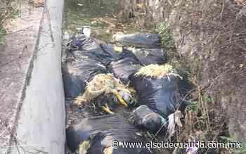 Pollos muertos en el canal de agua - El Sol de Cuautla