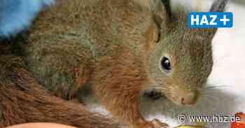 Wunstorf: Wildtier- und Artenschutzstation bietet Aktionstage für Kinder an - Hannoversche Allgemeine