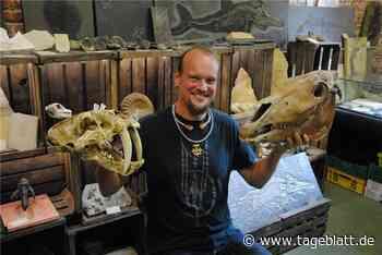 Museum Pangaea zeigt Schätze der Urzeit - TAGEBLATT - Lokalnachrichten aus der Stadt Stade. - Tageblatt-online