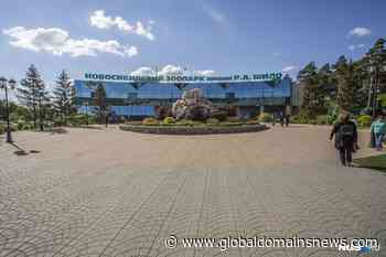 The Novosibirsk zoo for the third time to get the money to help the authorities - The Global Domains News