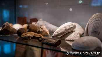 Musée archéologique et paléontologique Raymond Pillon Musée Pillon samedi 19 septembre 2020 - Unidivers