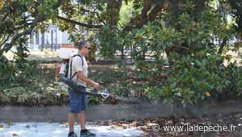 Castres : la guerre au moustique tigre est déclarée - LaDepeche.fr