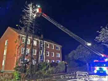 Polizei Langenfeld sucht Zeugen: Zwei 30 Meter hohe Fichten abgebrannt - Lokalkompass.de