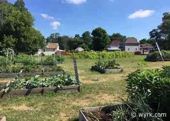 Niagara Falls Community Garden Offering Free Veggies - wyrk.com