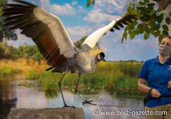 National Aviary visitors are staying a gray, crowned crane apart