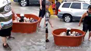 Couple in Mexico who lost 'everything' in Hanna flooding rescue their puppies from floodwaters - Fox News